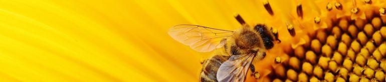 pszczoly.jpg